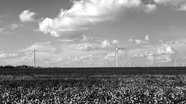 Cotton fields and wind turbines- West Texas