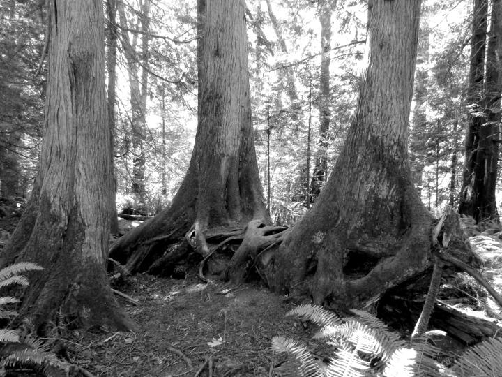 Whatcom Falls National Park in Bellingham, Washington - June 2015